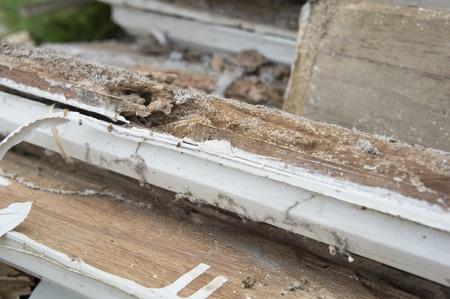 44099598 - termite damage rotten wood eat nest destroy