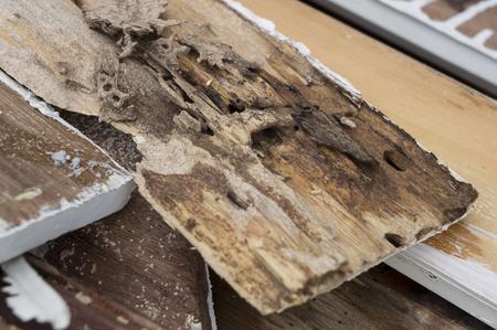 44668208 - termite damage rotten wood eat nest destroy